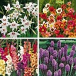 Double size flower bulbs for summer