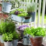 Not just flower bulbs! Herb Garden seeds